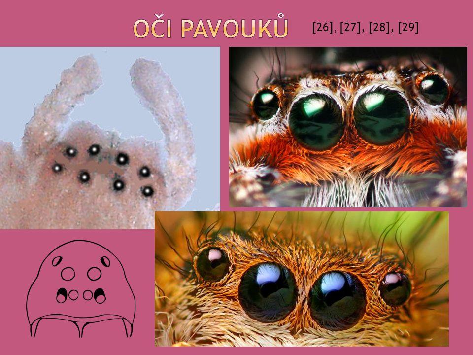 Oči pavouků [26], [27], [28], [29]